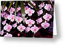 Pink Little Orchids Greeting Card