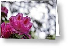 Pink Love 10 Greeting Card