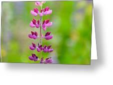 Pink Lupine Greeting Card