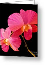 Pink Lux Greeting Card