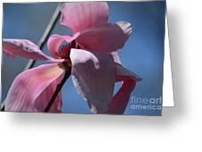 Pink Magnolia Closeup Greeting Card