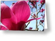Pink Magnolia Flowers Magnolia Tree Spring Art Greeting Card