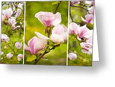 Pink Magnolia Triptych Greeting Card