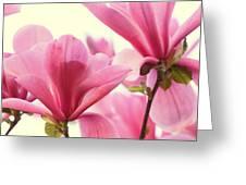 Pink Magnolias Greeting Card
