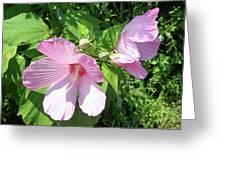 Pink Marsh Mallow Wildflower Greeting Card