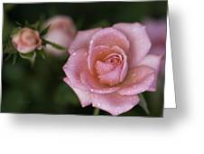 Pink Miniature Roses 3 Greeting Card