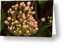 Pink Mountain Laurel Buds Greeting Card
