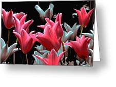 Pink N Silver Tulips Greeting Card