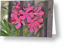Pink Oleander II Greeting Card