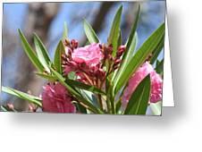 Pink Oleander IIi Greeting Card