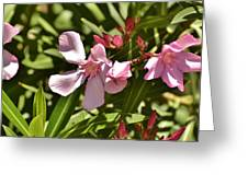 Pink Oleander Iv Greeting Card