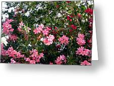 Pink Oleanders Greeting Card