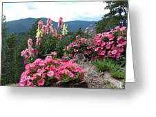 Pink On The Mountain Greeting Card