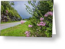 Pink On The Parkway Greeting Card