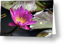 Pink On Water Greeting Card