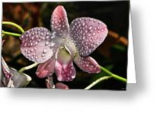 Pink Orchid And Dewdrops 013 Greeting Card