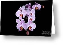 Pink Orchid Iv Greeting Card