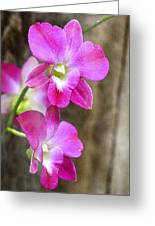 Pink Orchid Duo Greeting Card