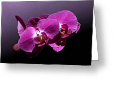 Pink Orchid Flowers Greeting Card