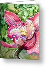 Pink Orchid Greeting Card