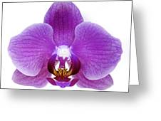 Pink Orchid On White Greeting Card