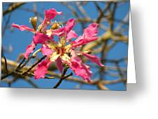 Pink Orchid Tree Greeting Card