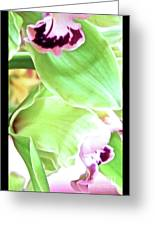 Pink Orchid With Green 1 Greeting Card