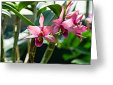 Pink Orchids - Exotic Tropical Glow Greeting Card