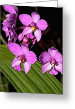 Pink Painted Orchids Greeting Card