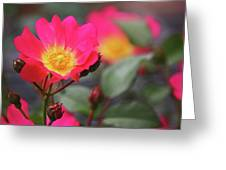 Pink Paradise Greeting Card