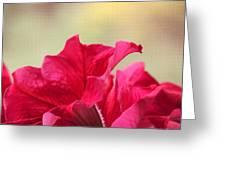 Pink Passion Petunia Greeting Card