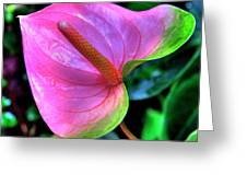 Pink Peace Lily Greeting Card