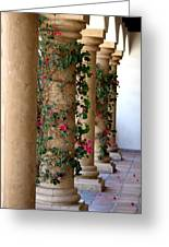 Pink Peacock Colored Bougainvillea Blossoms Climbing Pillars Photograph By Colleen Greeting Card