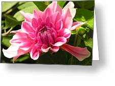 Pink Pedals Greeting Card