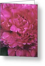 Pink Peony Blossom Greeting Card