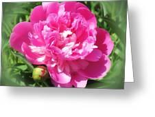 Pink Peony On Green Greeting Card