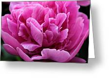 Pink Peony Watercolor Greeting Card