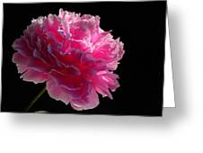 Pink Peony On A Black Background Greeting Card