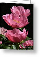 Pink Perspective 0552 Greeting Card