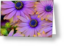 Pink Petals And Blue Buttons Greeting Card