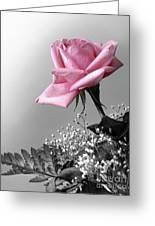 Pink Petals Greeting Card by Carlos Caetano
