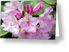 Pink Petals Greeting Card