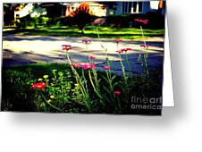 Pink Petals In The Sunlight Greeting Card