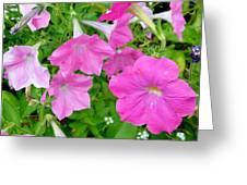 Pink Petunia Flower 11 Greeting Card