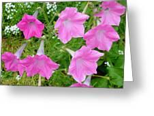 Pink Petunia Flower 9 Greeting Card