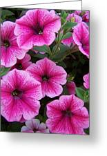 Pink Petunia Greeting Card