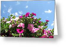 Pink Petunias In The Sky Greeting Card