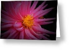 Pink Pinwheel Greeting Card