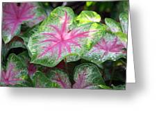 Pink Plants Greeting Card