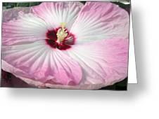 Pink Platter Greeting Card